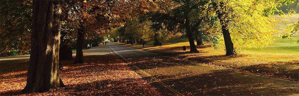 Autumn in London Park