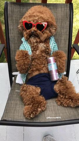 Teddy bear enjoying the sun