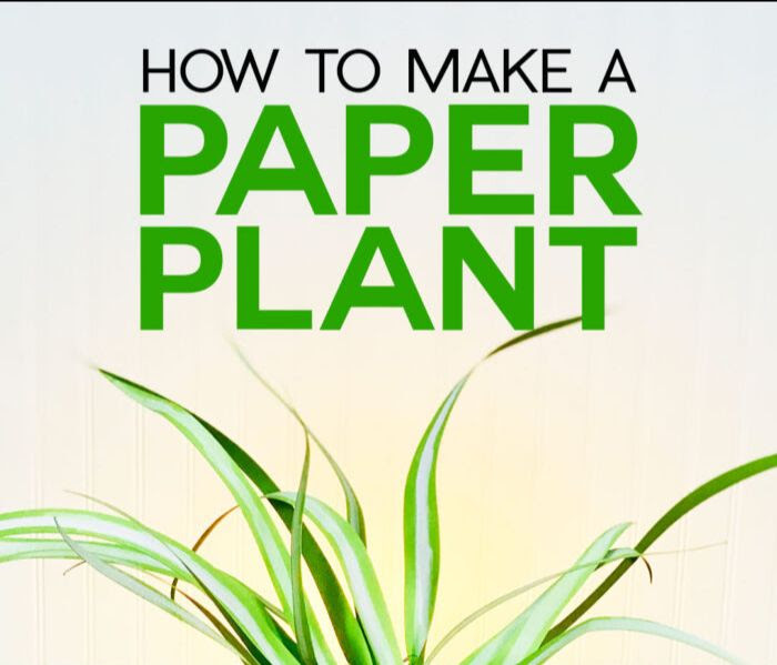 How to make a paper plant